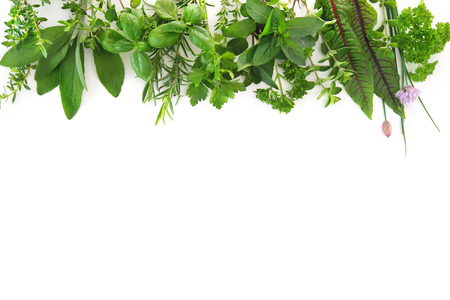 Various kinds of fresh garden herbs isolated on white background Reklamní fotografie