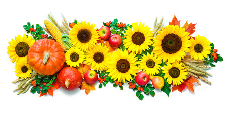 Autumn or Thanksgiving background with sunflowers, pumpkins, apples, wheat and rose hips isolated on white
