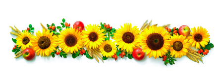 Autumn or Thanksgiving background with sunflowers, apples, wheat and rose hips isolated on white