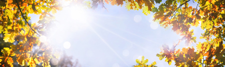 Autumnal oak leaves on the sun. Fall blurred background Foto de archivo - 107317148