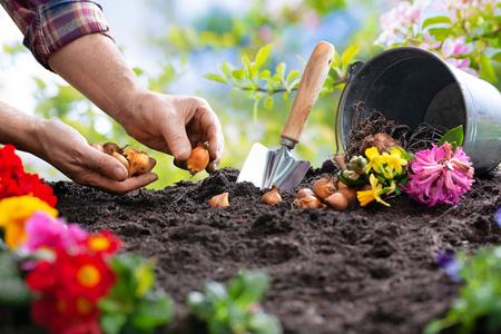 Planting spring flowers in sunny garden