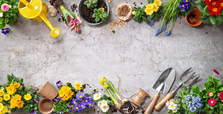 Gardening tools and spring flowers on the terrace in the garden Stok Fotoğraf