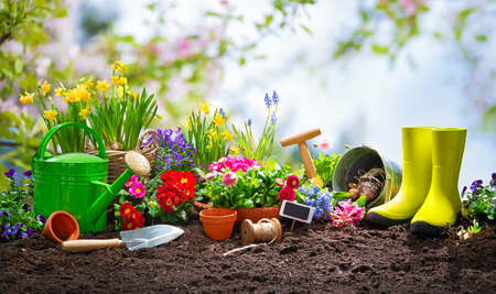 Planting spring flowers in the sunny garden
