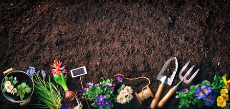 Frühlingsblumen im Garten pflanzen. Gartengeräte und Blumen auf Erde