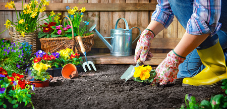 Gardener planting flowers in sunny garden 版權商用圖片
