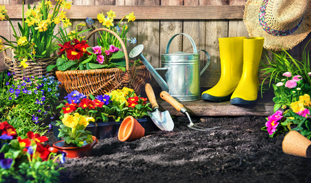 Planting flowers in sunny garden. Gardening tools and spring flowers at the backyard