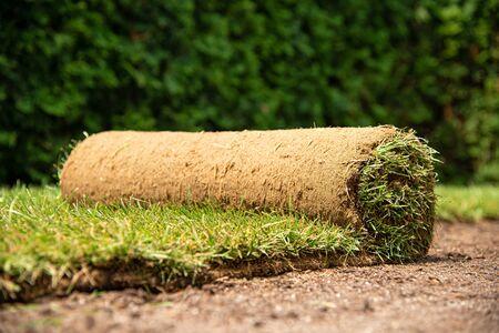 Grass turf rolls for new garden lawn 스톡 콘텐츠