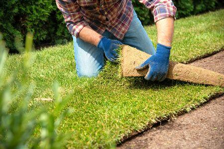 Mann, der Grasrasenrollen für neuen Gartenrasen legt Standard-Bild