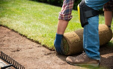 Man laying grass turf rolls for new garden lawn