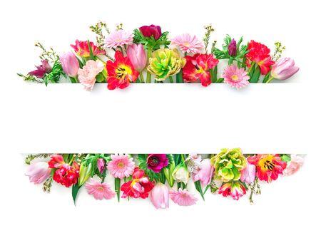 白に分離カラフルな春の花。コピースペースのあるトップビュー 写真素材