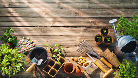 Gardening tools and seedlings on wooden table in greenhouse. Spring in the garden