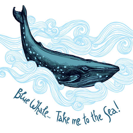 Cute Illustration With Blue Whale