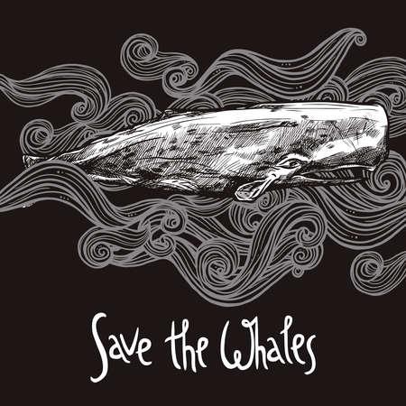 Hand Drawn Sperm Whale On Chalkboard