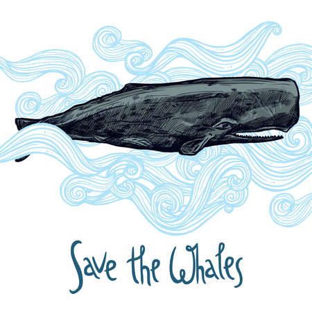 cachalot: Hand Drawn Whale Illustration In Blue Waves. Save The Whales