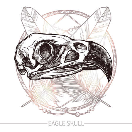 cranial skeleton: Sketch Eagle Skull. Trendy Hand Drawn Illustration