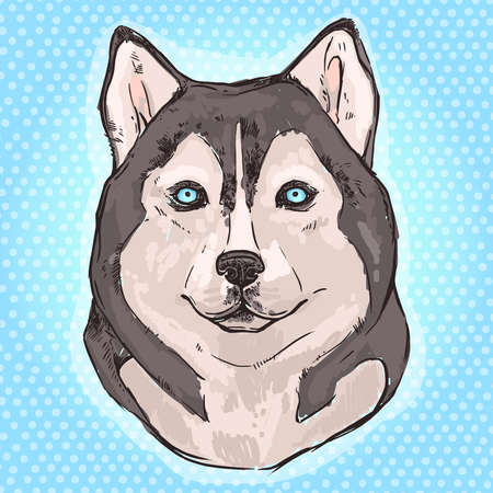 alaskan: Hand drawn Siberian Husky on light blue background