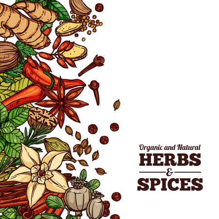 Herbs And Spices Color Background Ilustracja