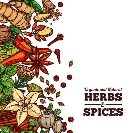 Kruiden En Specerijen Kleur Achtergrond
