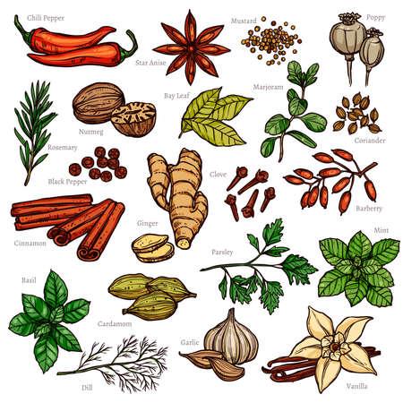 Schets kruiden en specerijen kleurenset Stock Illustratie