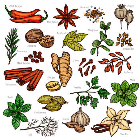 Sketch Herbs And Spices Color Set