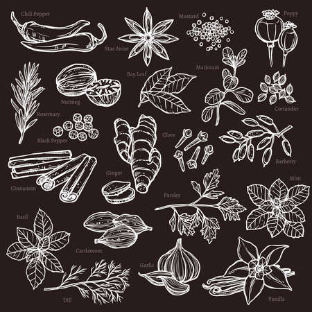 Sketch Herbs And Spices Set On Chalkboard Ilustracja