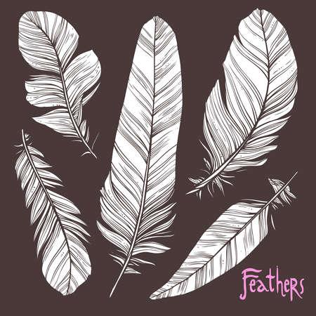 Hand drawn illustrations of feather Illustration