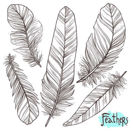 Hand drawn illustrations of feathers Çizim