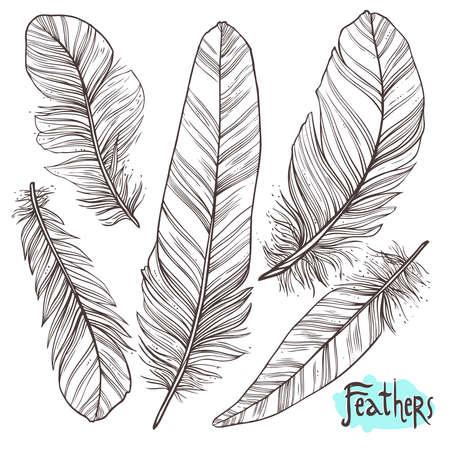 Hand drawn illustrations of feathers Illustration
