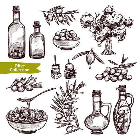 Colección de aceite de oliva dibujado a mano con olivo, ramas de olivo y botellas de olivo Ilustración de vector