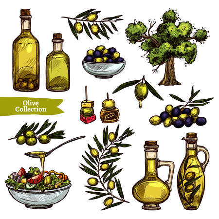Hand Drawn Color Olive Oil Collection With Sketch Olive Tree, Olive Branches And Olive Bottles