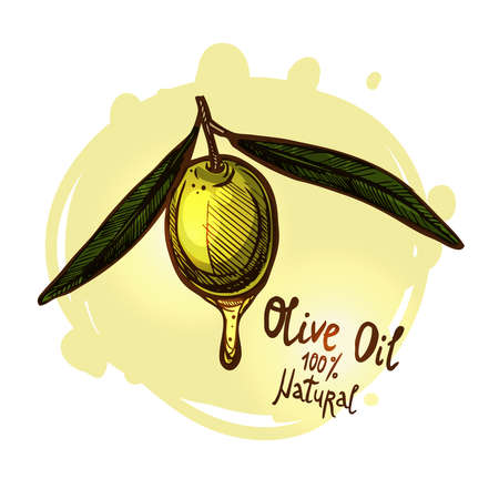 Hand Drawn Green Olive On Branch With Leaves Isolated. Color Sketch Style