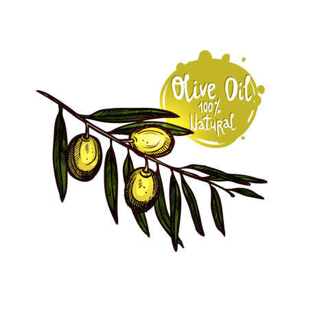Hand Drawn Green Olives On Branch With Leaves Isolated. Color Sketch Style. Olive Branch With Label