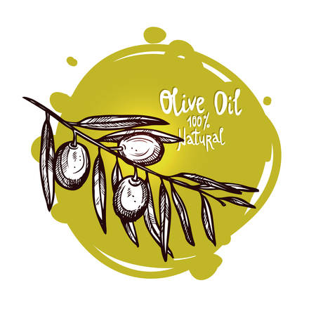 Hand Drawn Green Olives On Branch With Leaves Isolated. Monochrome Sketch Style. Olive Branch With Label Illustration