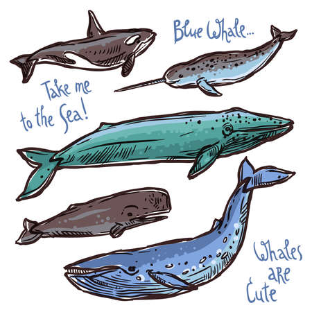 Whales Doodle Cute Set. Collection Of Different Whales In Hand Drawn Style