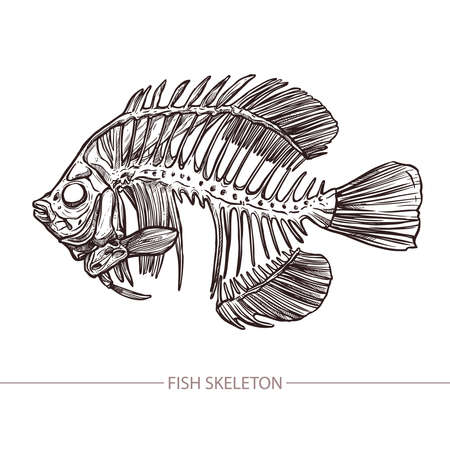 Fish Skeleton. Hand Drawn Sketch Style. Fashion Print And Hipster Poster Stock fotó - 101207433