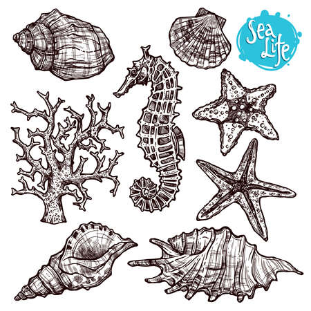 Hand Drawn Sea Set With Shells, Sea Horse, Starfish And Corals. Sea Life In Sketch Vintage Style