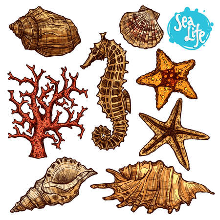 Hand Drawn Color Sea Set With Shells, Sea Horse, Starfish And Corals. Sea Life In Sketch Vintage Style.