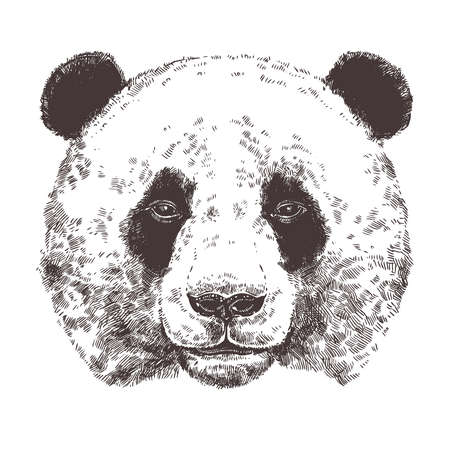 Sketch Of Giant Panda. Hand Drawn Head In Monochrome Style