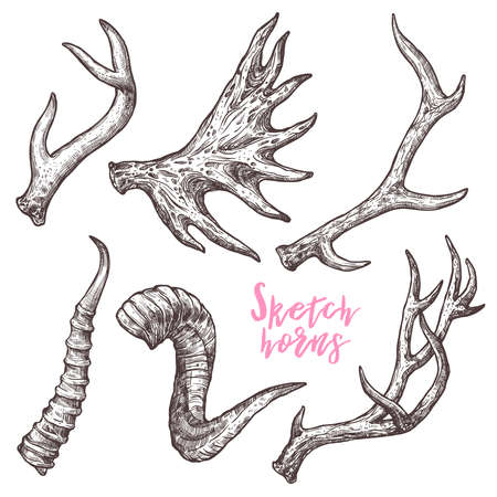 Collection Of Hand Drawn Different Animals Horns. Sketch Horns Of Deer, Antelope, Ram, Sheep, Elk