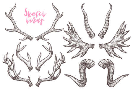 Collection Of Hand Drawn Different Animals Horns. Sketch Horns Of Deer, Antelope, Ram, Sheep, Elk. Boho And Rustic Illustration Ilustração