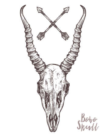 Sketch Of Antelope Skull With Tribal Arrows. Boho And Hipster Hand Drawn Illustration. Anatimical Drawing Of Skull With Horns