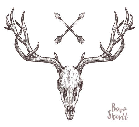 Sketch Of Hipster Deer Skull With Tribal Arrows. Boho Hand Drawn Illustration. Anatimical Drawing Of Skull With Horns Vettoriali