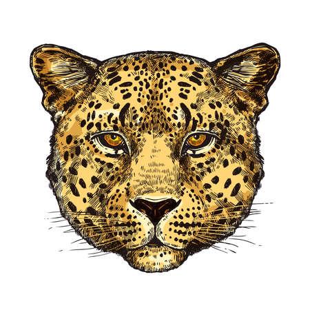 Sketch Hand Drawn Leopard Head In Color Illustration