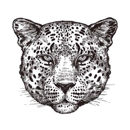 Sketch Hand Drawn Leopard Head Vettoriali