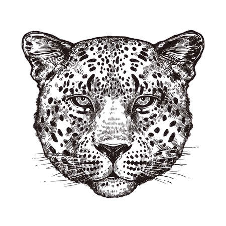 Sketch Hand Drawn Leopard Head Illustration