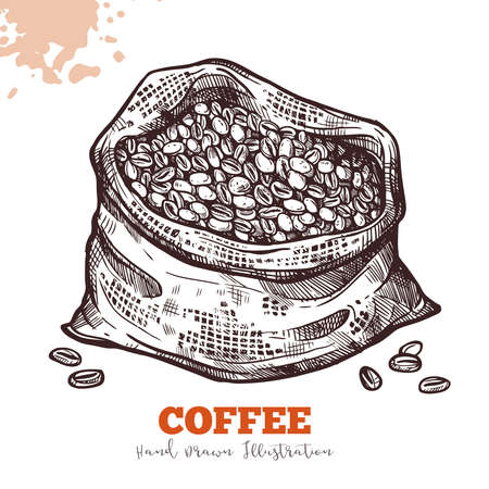 Bag with coffee beans in engraving style, sketch. Harvest and ingathering of coffee. Hand drawn vector Illustration isolated on white background