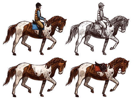 Horse and rider, monochrome and color set, sketch. Four colors and black ink lines. Horseback ridding concept. Hand drawn vector isolated Illustration