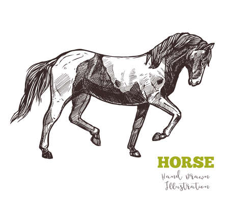 Horse in full-length profile, hand drawn sketch. Vector illustration of animal in motion, graceful step. Horseback ridding concept. Image in engraved style isolated on white background