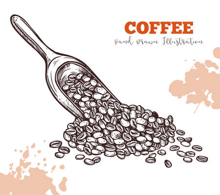 Scoop with coffee beans hand draw sketch isolated. Harvest, ingredient for coffee drinks concept. Hand drawn sketch isolated on white. Vector illustration