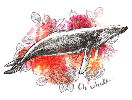 Concept art with sketch humpback whale and rose flowers. Vector trendy boho hand drawn illustration for print or poster. Symbol of dreams, harmony and adventure